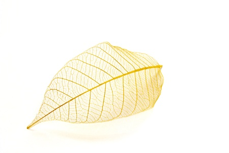 fine image of beautiful transparent leaf isolated on white photo