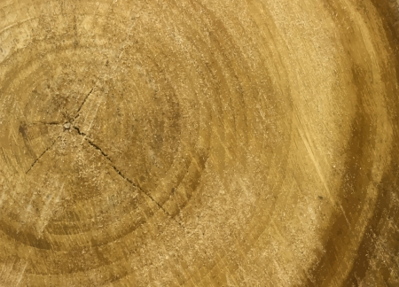 wood cross section: new textured background with wooden old circles can use like wallpaper Illustration