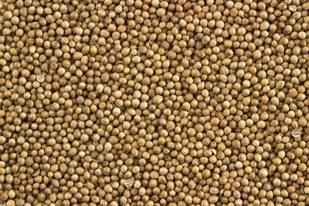 coriander dry seeds background food design