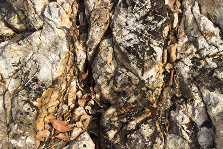 rusty background: natural cracked rock texture and dry leafs. abstract rusty background