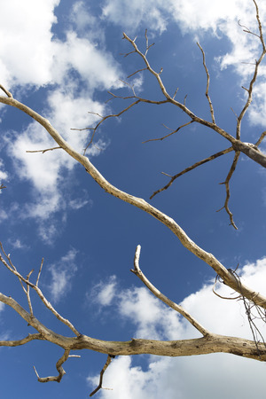 cloudy sky: cloudy sky and branch of dead tree