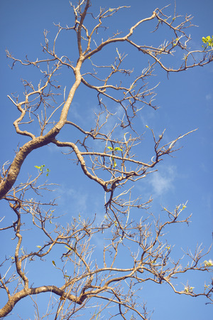renewal: blue sky and branch of a tree with some leafs. renewal concept