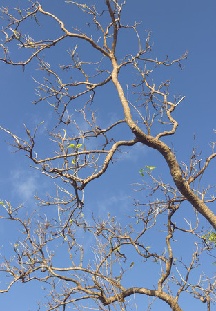 to metamorphose: blue sky and branch of a tree with some leafs. renovation concept