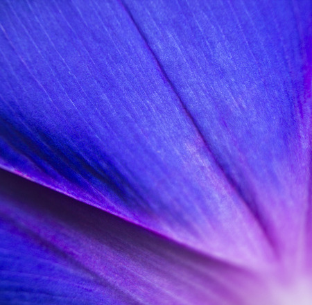 macro close up: extreme close up shot of natural flower. vivid petal background Stock Photo