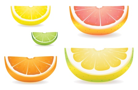 proportional: A selection of citrus fruit slices in proportional sizes. Illustrated are lemon, lime, orange, pink grapefruit and pomelo fruit.