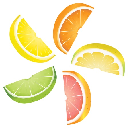 lime slice: A selection of citrus fruit slices arranged into a revolving shape. Illustrated are lemon, lime, orange, pink grapefruit and pomelo fruit.