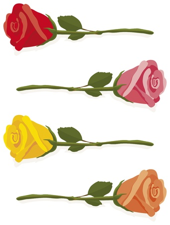 rosa: Illustrated red, pink, yellow and orange roses laying on a white background. Illustration