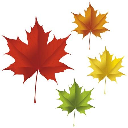 赤、黄色、オレンジ、緑の色のカエデの葉。