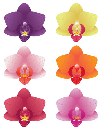 Phalaenopis orchid blossoms in basic colors isolated on white.