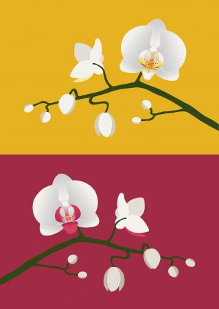 Budding white orchids on red and yellow backgrounds.
