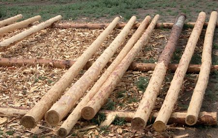 set of fresh whole timbers, concept of deforestation Stock Photo - 3248687