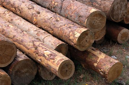 set of fresh whole timbers, concept of deforestation photo