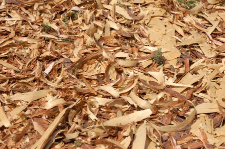 land is coated with film of wood shavings, wood industry Stock Photo