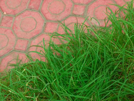 footway: closeup of green grass and cobblestone footway