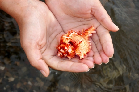 closeup of female hands holding colored sea shell photo