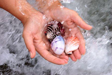 closeup of female hands holding set of colored sea shells photo