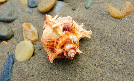 closeup of colored sea shell over wet sand photo