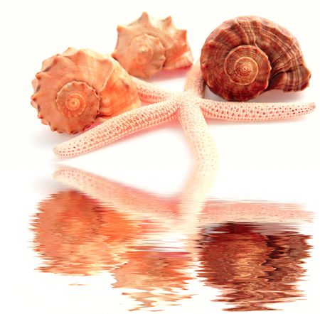 starfish and shells of different colors photo