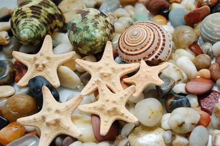 set of tropical  shells, marble pebbles and seastars photo