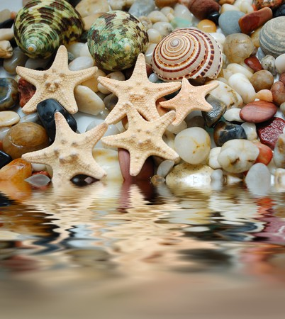 set of tropical  shells, marble pebbles and seastars