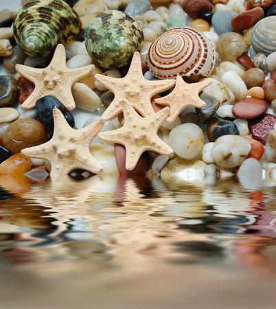 set of tropical  shells, marble pebbles and seastars