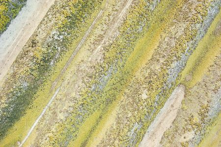 wall cowered with lichen photo