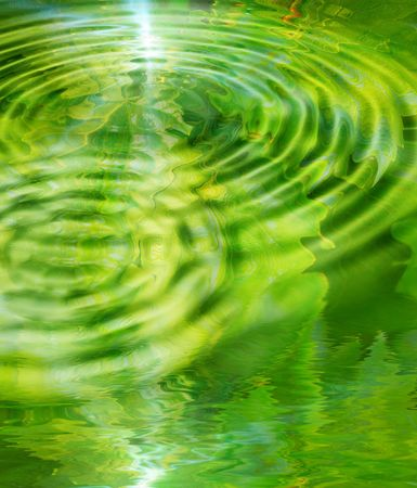 Green leaves reflected in water photo