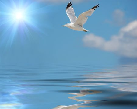 flying seagull against sky with clouds and water