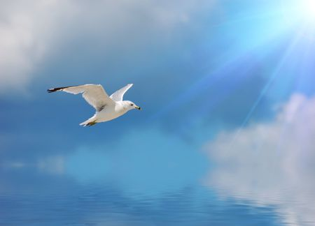 flit: flying seagull against sky with clouds Stock Photo