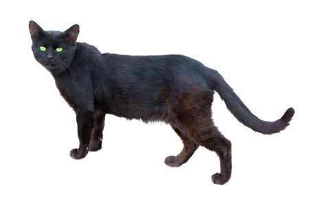 seasoned black cat with green eyes isolated on white photo