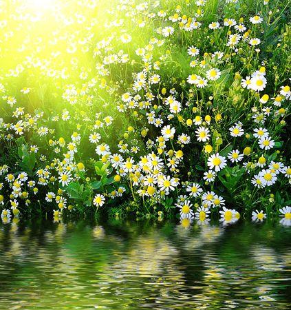daisys photo