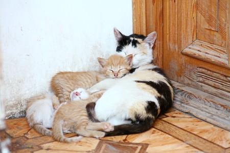 cute cats photo