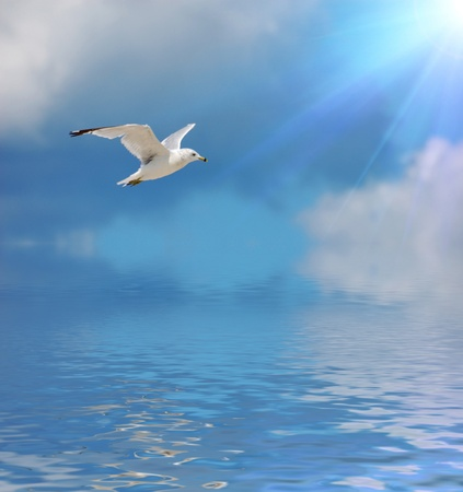 fluttering: seagull Stock Photo