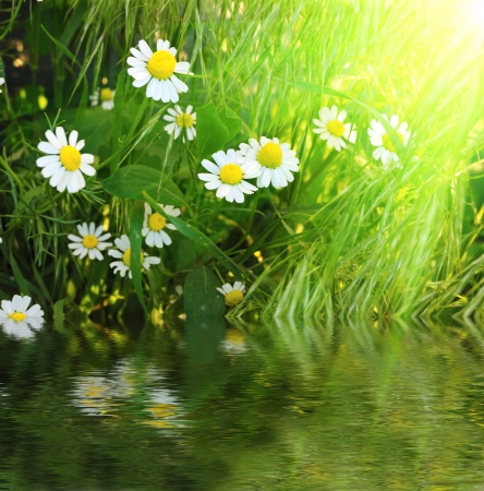 flowers in grass photo