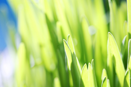 Close up of the green grass. Soft focus. Stock Photo - 8466436