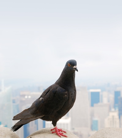 dove on the roof of the sky scraper agains misty sky with smog photo
