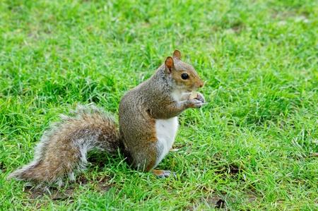 squirrel Stock Photo - 10177753