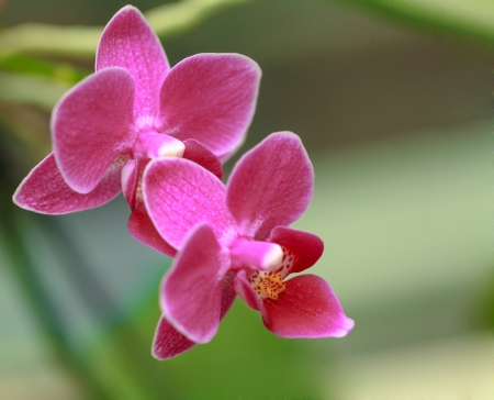 tight focus: macro of orchid in bloom