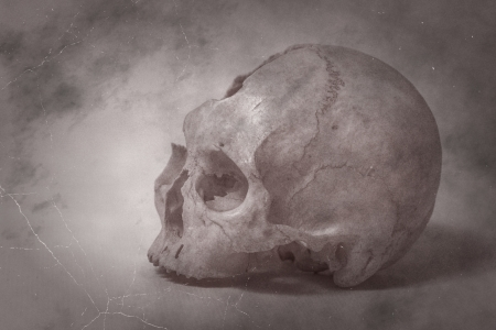 Old photo Side view of human skull. single skull . Human skull on a white background. photo