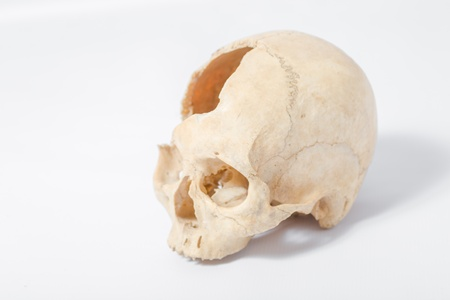 Side view of human skull on white photo
