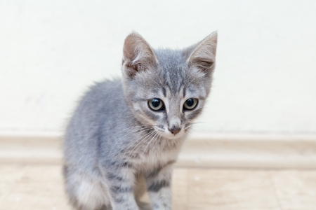 kitten sitting indoors against wall photo