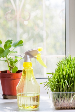 vertical shot - grass in container and yellow sprayer on the windowsill closeup indoors photo