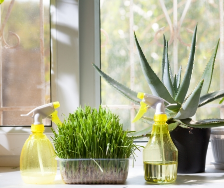 two sprayers and different home plants in the pot on window-sill photo