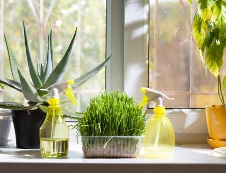 家の植物やウィンドウ噴霧器 写真素材
