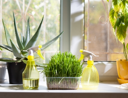 potting: home plants and sprayer on the window