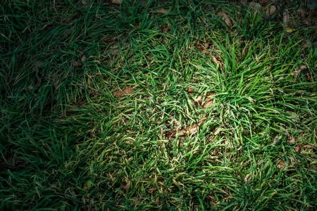 green grass backround close up macro, vignette frame, spot of light photo