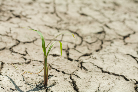 scratchy: little green plant grow in the scratchy earth Stock Photo
