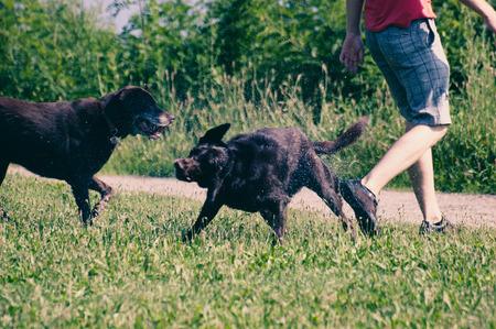 Dogs play outdoors near master photo