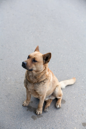 Homeless dog sitting on a road vertical image photo