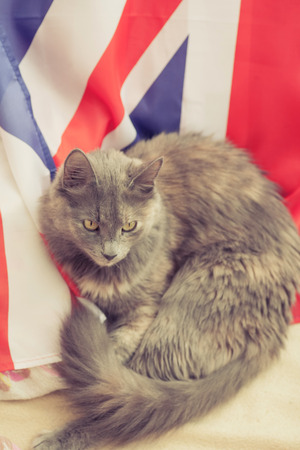 Gray cat lying on a Great Britain flag photo